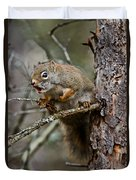 Red Squirrel Pictures 161 Duvet Cover