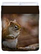 Red Squirrel Pictures 170 Duvet Cover
