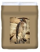 Red-tailed Hawk 4 Duvet Cover