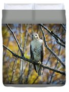 Red-tailed Hawk In The Fall Duvet Cover