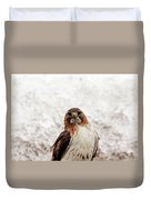 Red Tailed Hawk Portrait Duvet Cover