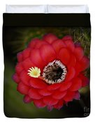 Red Torch Cactus-echinopsis  Duvet Cover