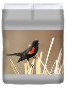 Red Winged Blackbird I I Duvet Cover