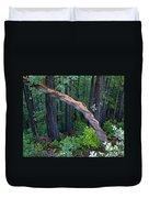 Redwood Forest Duvet Cover