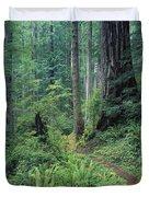 Redwood Park Trail Duvet Cover