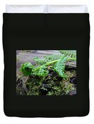 Redwood Tree Forest Fern Art Prints Ferns Giclee Baslee Trouman Duvet Cover