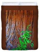 Redwood Tree Trunk At Pilgrim Place In Claremont-california   Duvet Cover