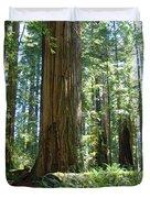 Redwood Trees Forest California Redwoods Baslee Duvet Cover