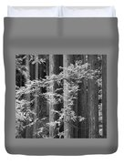 Redwoods Ir 0625 Duvet Cover