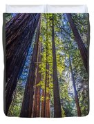 Redwoods Of Muir Woods Duvet Cover