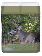 Resting Buck Duvet Cover