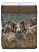 Resting Rams Duvet Cover