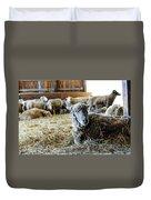 Resting Sheep Duvet Cover