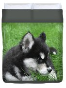 Resting Two Month Old Alusky Puppy Dog In Grass Duvet Cover