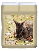 Resting Wallaby Duvet Cover