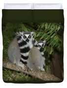 Ring-tailed Lemurs Duvet Cover
