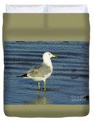 Ringed Billed Sea Gull Duvet Cover