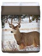 Rmnp Mule Deer 2 Duvet Cover