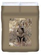 Rocky Mountain Big Horn Sheep Duvet Cover