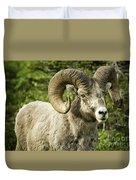 Rocky Mountain Bighorn Sheep Duvet Cover