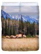 Rocky Mountain Elk In The Rockies Duvet Cover