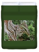 Roots - Welcome To Olympic National Park Wa Usa Duvet Cover by Christine Till