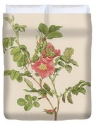 Rosa Cinnamomea The Cinnamon Rose Duvet Cover