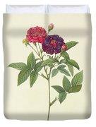 Rosa Gallica Purpurea Velutina Duvet Cover by Pierre Joseph Redoute