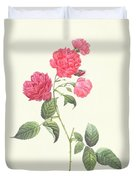 Rosa Indica Caryophyllea Duvet Cover by Pierre Joseph Redoute