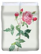 Rosa Indica Duvet Cover by Pierre Joseph Redoute