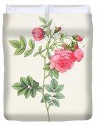 Rosa Pimpinellifolia Flore Variegato  Duvet Cover by Pierre Joseph Redoute