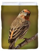 Rosy Finch Posing I Duvet Cover
