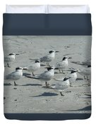 Royal Terns #3 Duvet Cover