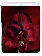 Ruby Red Amaryllis Duvet Cover