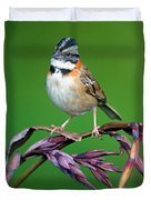 Rufous-collared Sparrow Zonotrichia Duvet Cover