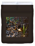 Rufous Sided Towhee At A Glance Duvet Cover