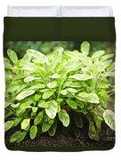 Sage Plant Duvet Cover