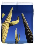 Saguaros Dwaft One Another Duvet Cover