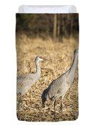 Sandhill Cranes  2015-2 Duvet Cover