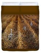 Sandhill Cranes - Cornfield Duvet Cover