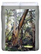Santa Barbara Eucalyptus Forest Duvet Cover