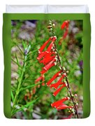 Scarlet Bugler In Rancho Santa Ana Botanic Garden In Claremont-californi Duvet Cover