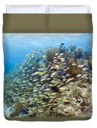 Schools Of Grunts, Snappers, Tangs Duvet Cover by Karen Doody