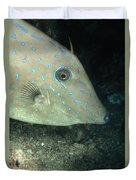 Scrawled Filefish Profile, Alutera Duvet Cover