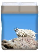 Scruffy Mountain Goat On The Mount Massive Summit Duvet Cover