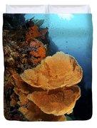 Sea Fan Coral - Indonesia Duvet Cover