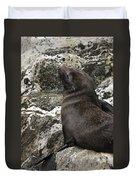 Sea Lion Close-up Duvet Cover