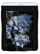 Sedum Clavatum Beautiful Cultivated Stonecrop Duvet Cover