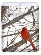 Seeing Red - Northern Cardinal - Cardinalis Cardinalis Duvet Cover