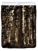 Sequoia Grove Along Crescent Meadow Loop Duvet Cover